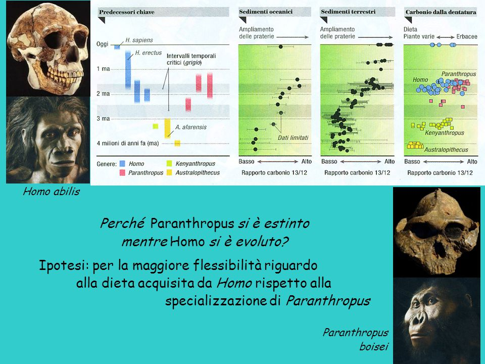 Perché Paranthropus si è estinto mentre Homo si è evoluto