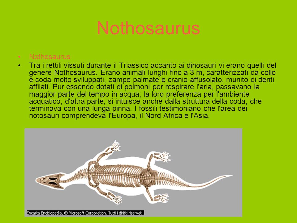 Nothosaurus Nothosaurus