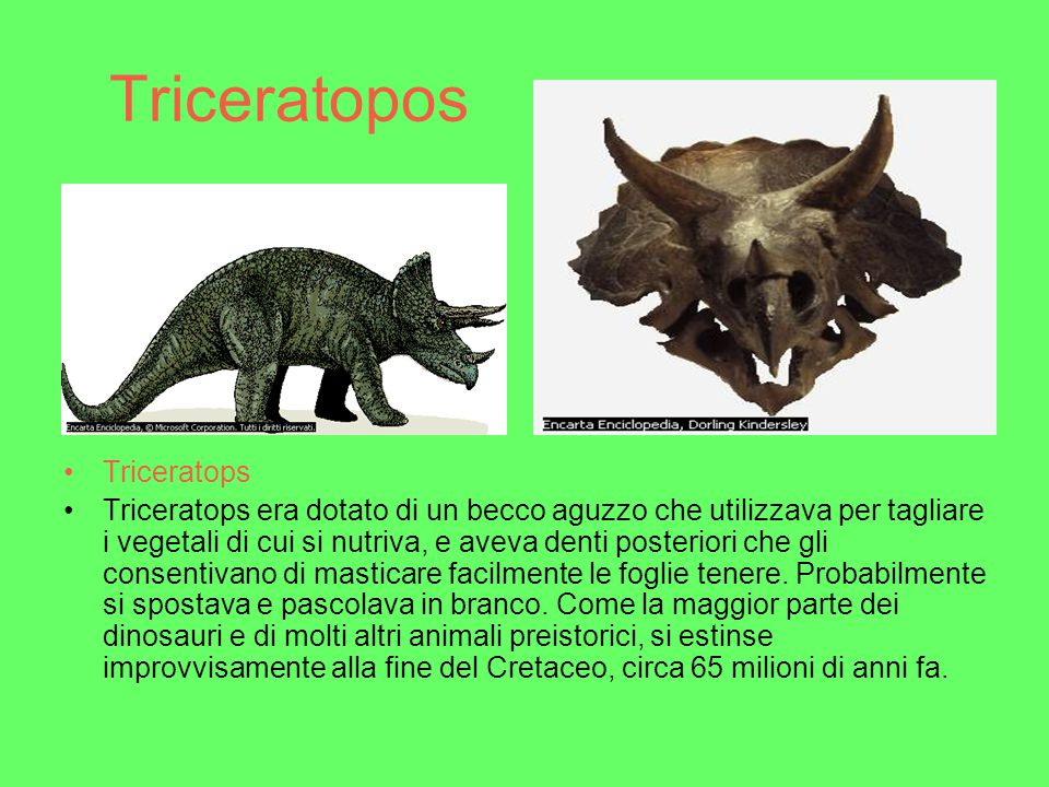 Triceratopos Triceratops