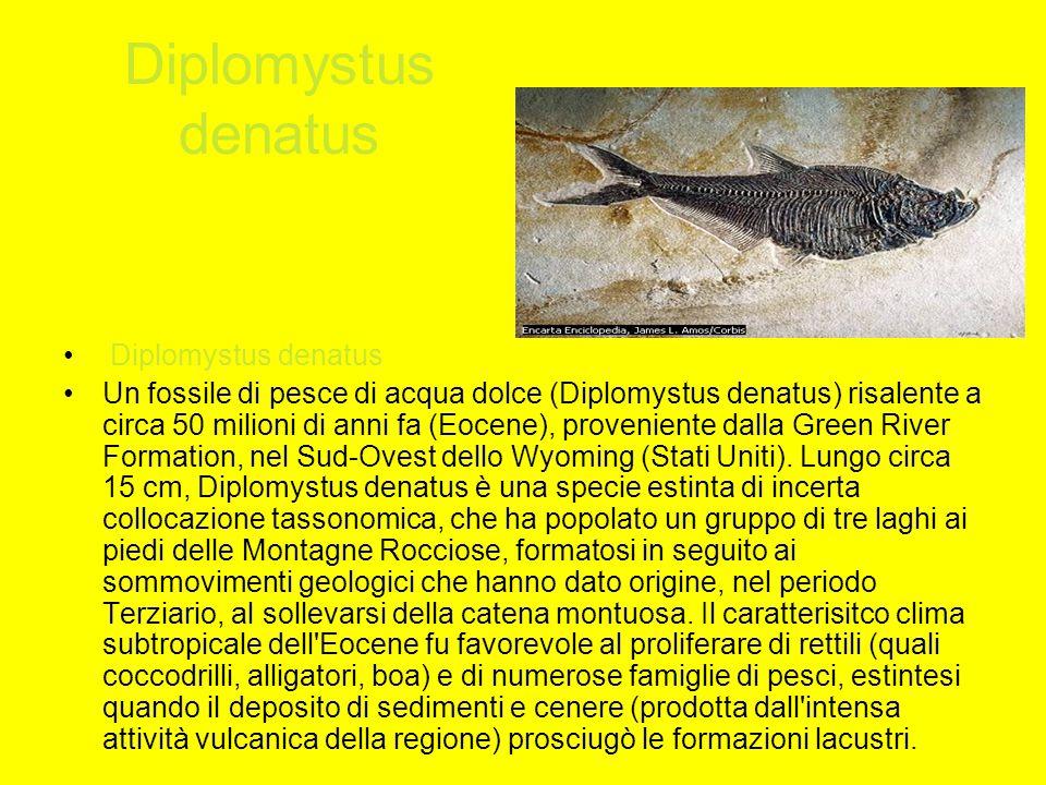 Diplomystus denatus Diplomystus denatus
