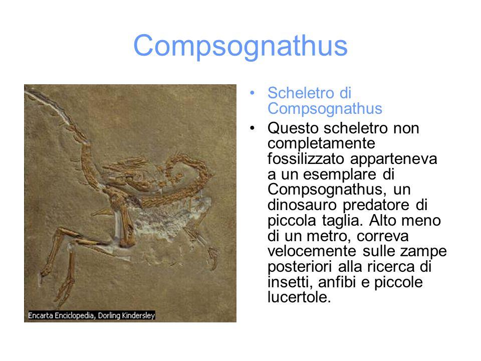 Compsognathus Scheletro di Compsognathus