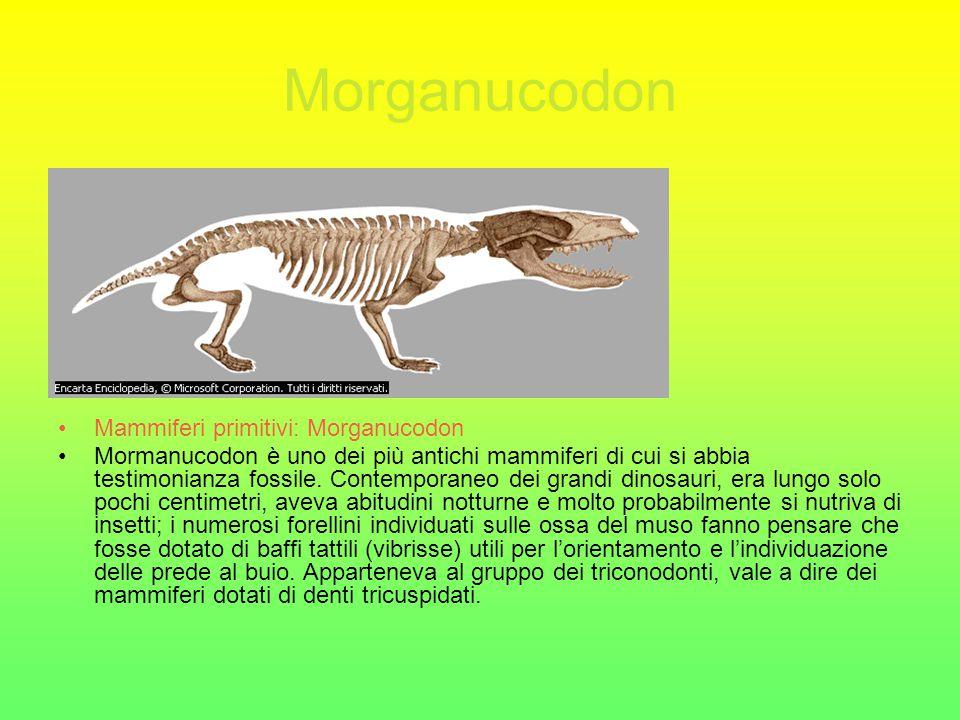 Morganucodon Mammiferi primitivi: Morganucodon