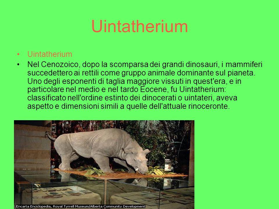 Uintatherium Uintatherium