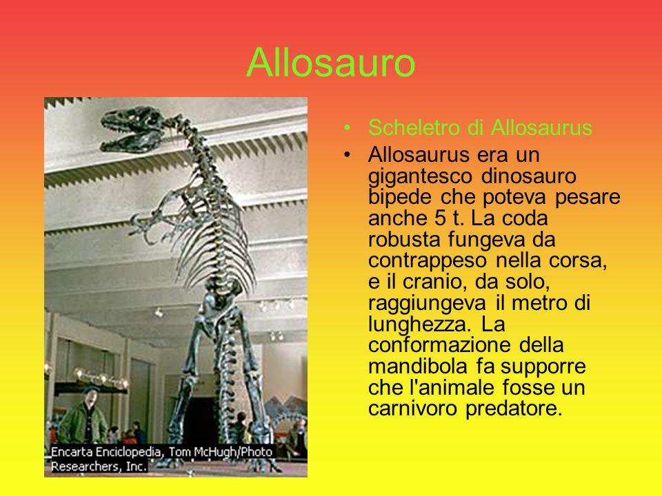 Allosauro Scheletro di Allosaurus