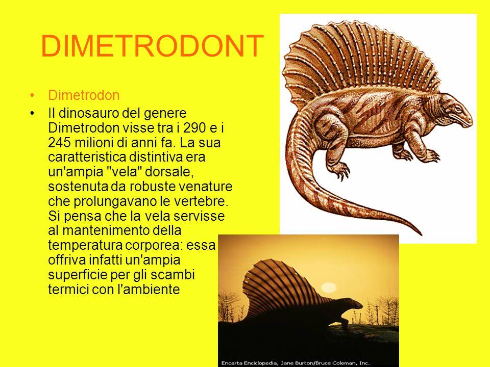 DIMETRODONT Dimetrodon