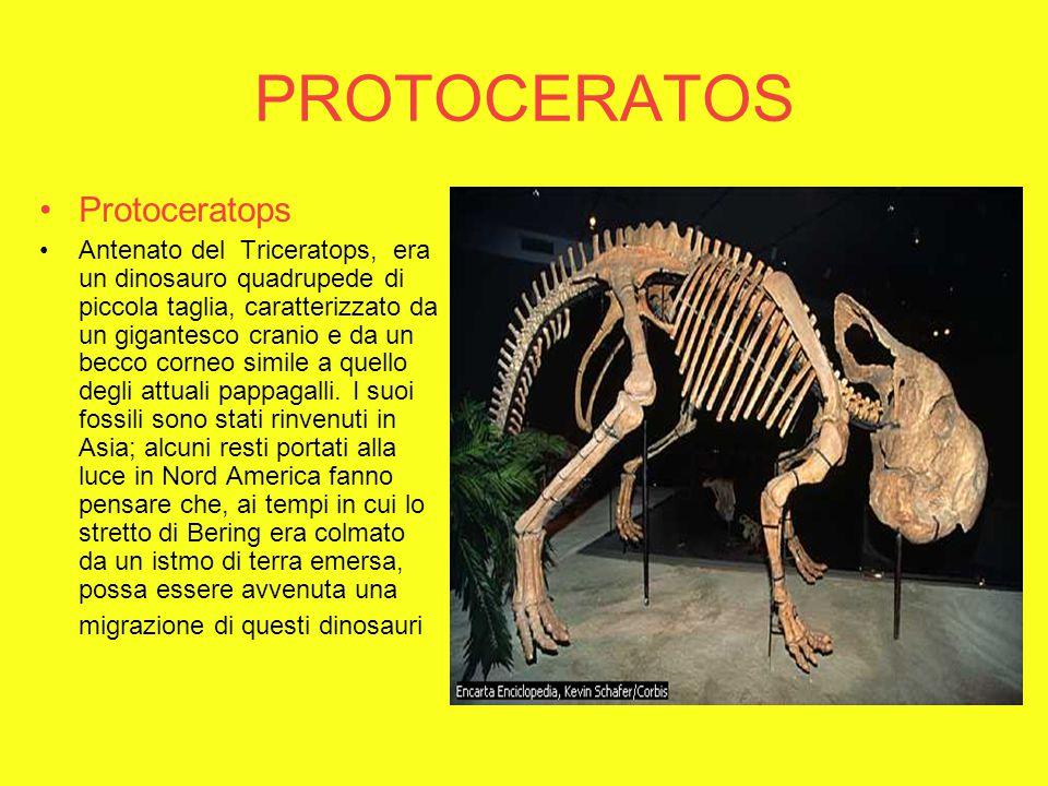 PROTOCERATOS Protoceratops
