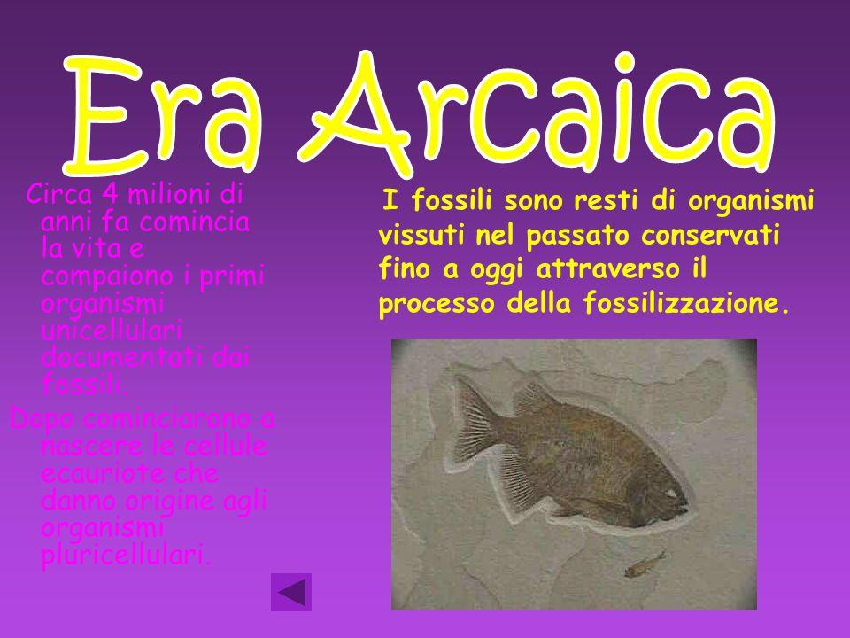 Era Arcaica Circa 4 milioni di anni fa comincia la vita e compaiono i primi organismi unicellulari documentati dai fossili.