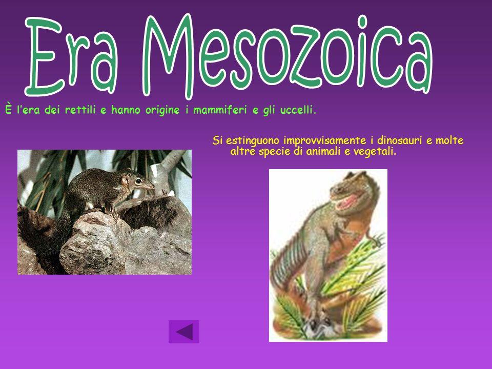 Era Mesozoica È l'era dei rettili e hanno origine i mammiferi e gli uccelli.