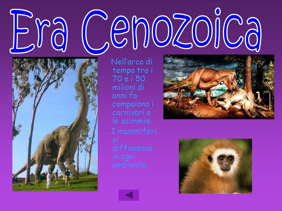 Era Cenozoica Nell'arco di tempo tra i 70 e i 50 milioni di anni fa compaiono i carnivori e le scimmie.