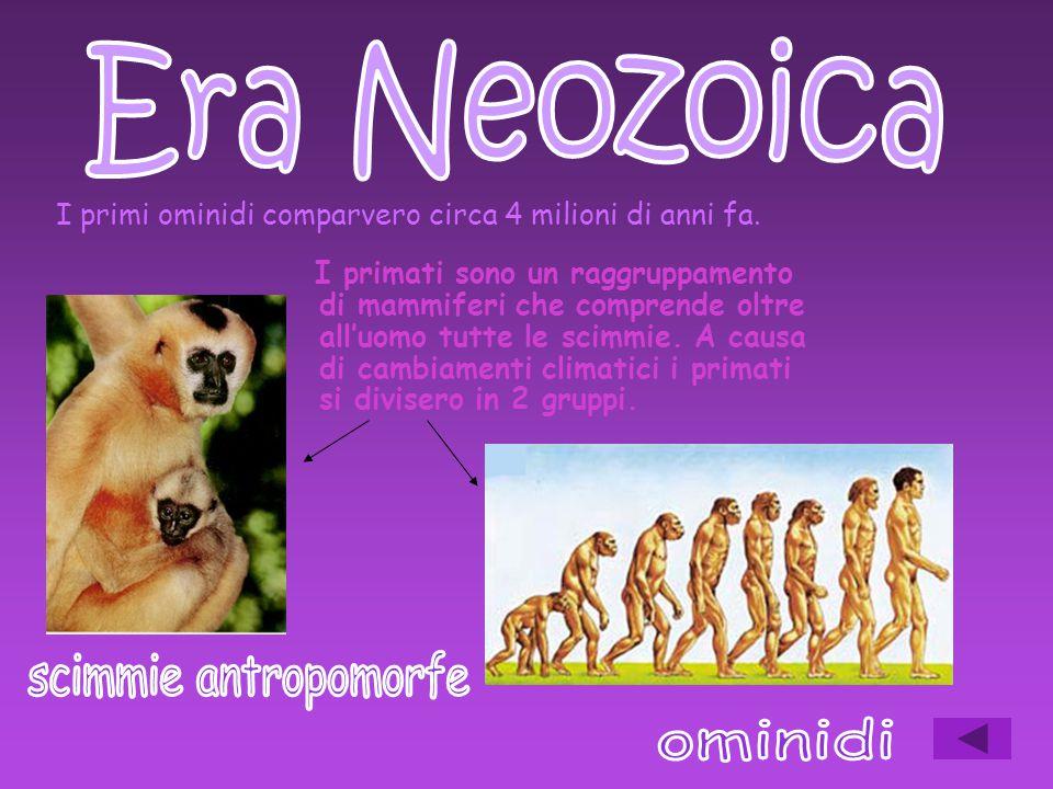 Era Neozoica scimmie antropomorfe ominidi