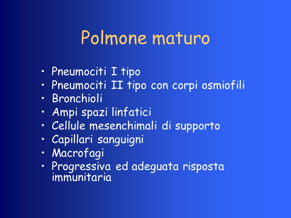 Polmone maturo Pneumociti I tipo