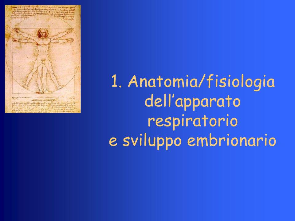 1. Anatomia/fisiologia dell'apparato respiratorio e sviluppo embrionario