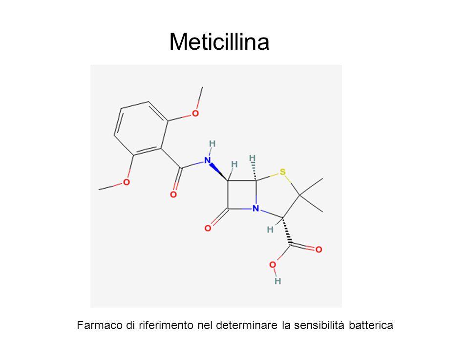 Meticillina Farmaco di riferimento nel determinare la sensibilità batterica