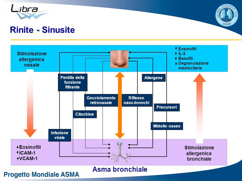 Rinite - Sinusite Asma bronchiale Stimolazione allergenica nasale
