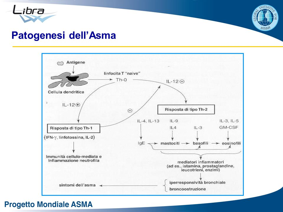 Patogenesi dell'Asma