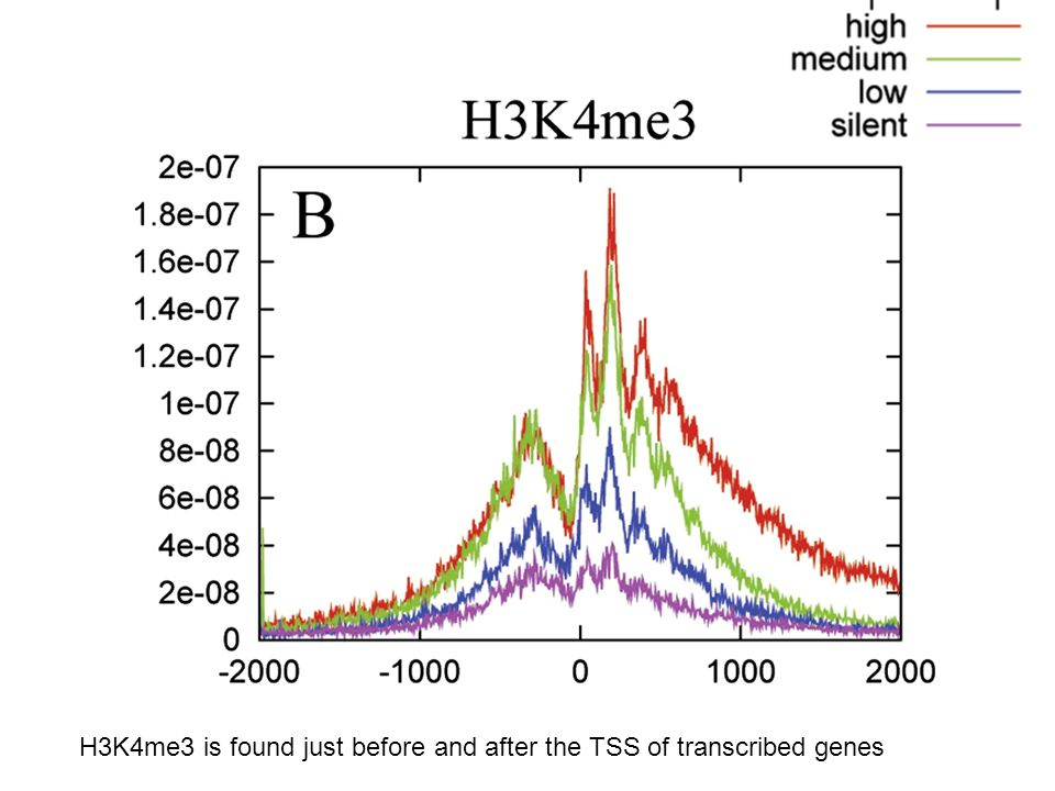 H3K4me3 is found just before and after the TSS of transcribed genes