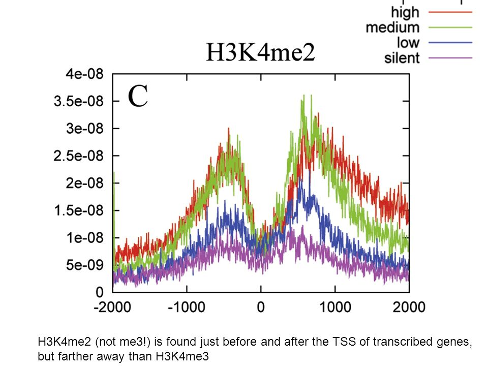 H3K4me2 (not me3!) is found just before and after the TSS of transcribed genes,