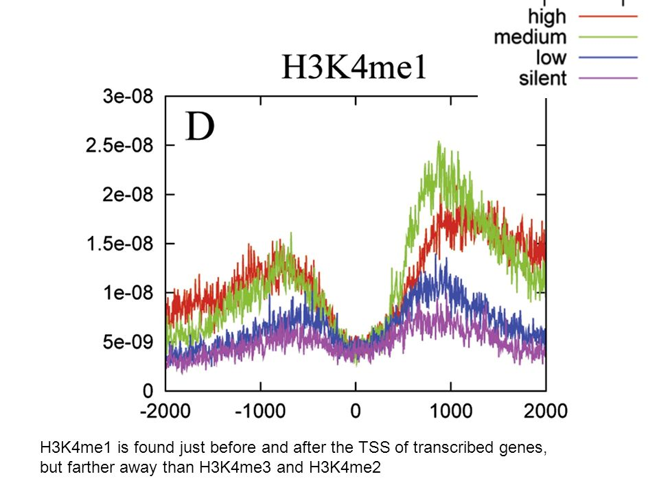 H3K4me1 is found just before and after the TSS of transcribed genes,