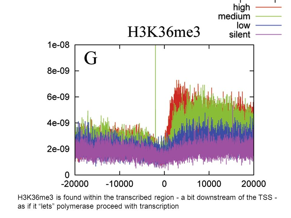 H3K36me3 is found within the transcribed region - a bit downstream of the TSS -