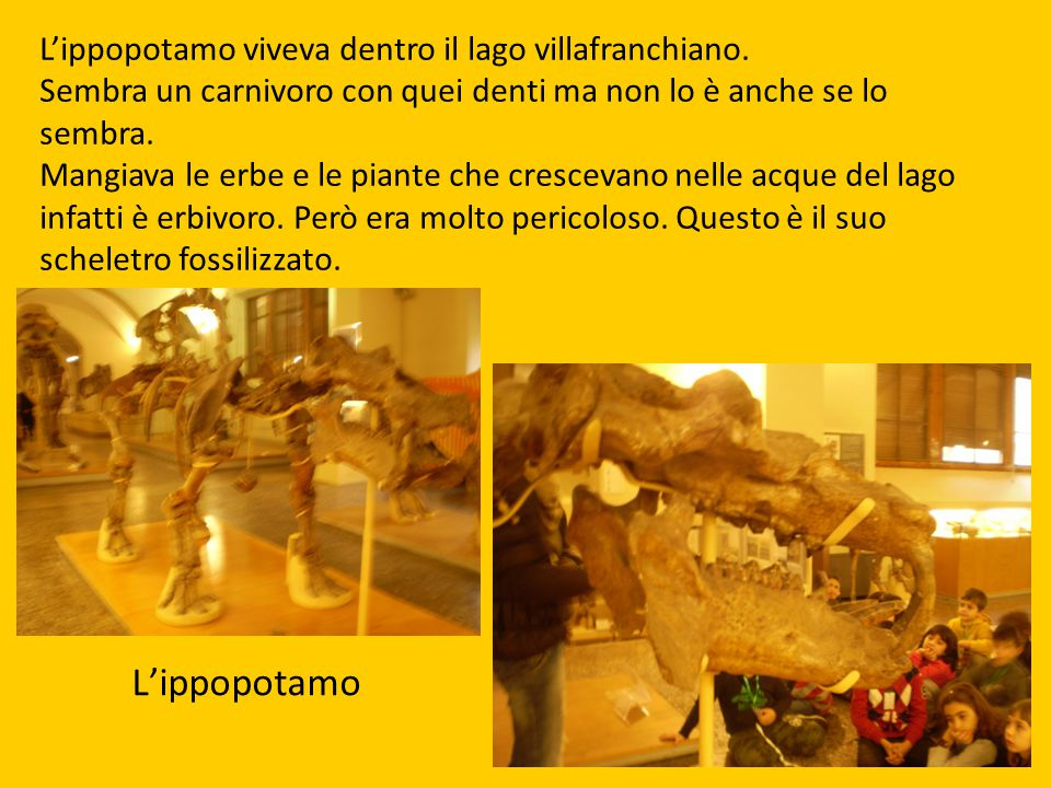 L'ippopotamo viveva dentro il lago villafranchiano