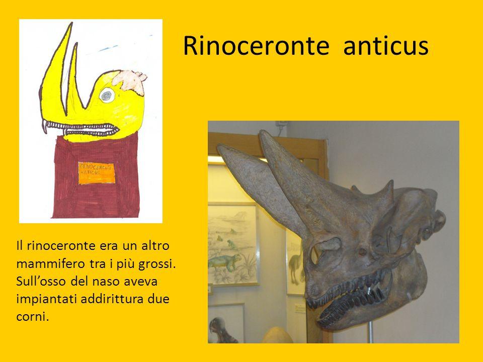 Rinoceronte anticus Il rinoceronte era un altro mammifero tra i più grossi.
