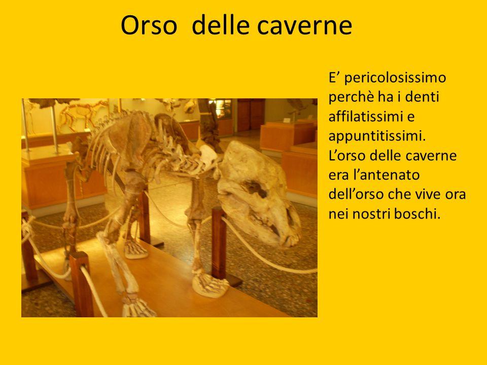 Orso delle caverne E' pericolosissimo perchè ha i denti affilatissimi e appuntitissimi.