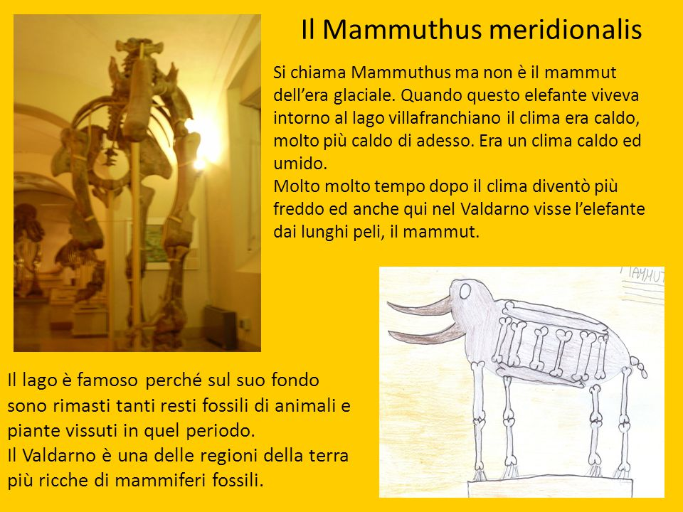 Il Mammuthus meridionalis