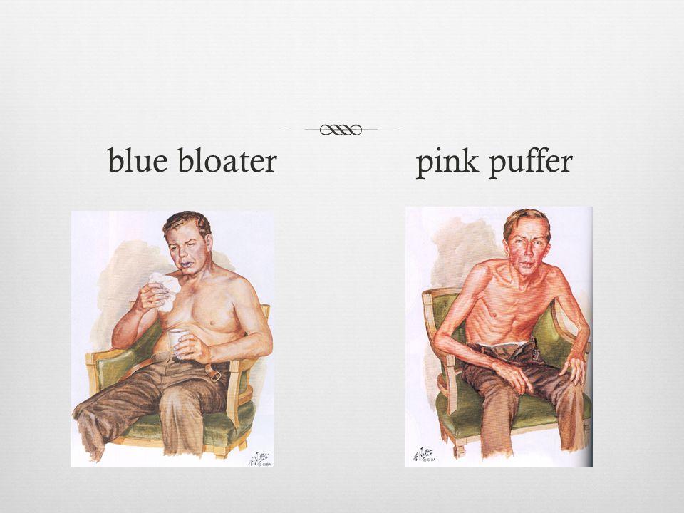 blue bloater pink puffer