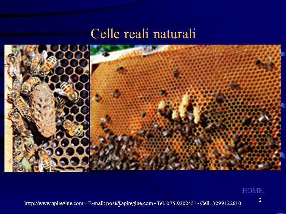 Celle reali naturali HOME