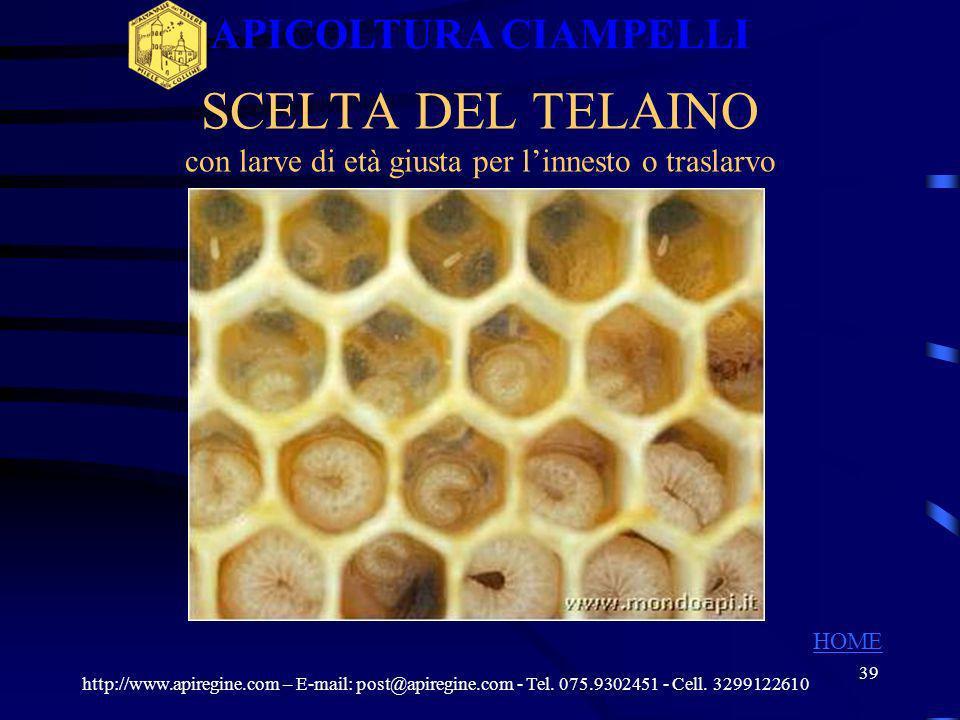 SCELTA DEL TELAINO con larve di età giusta per l'innesto o traslarvo