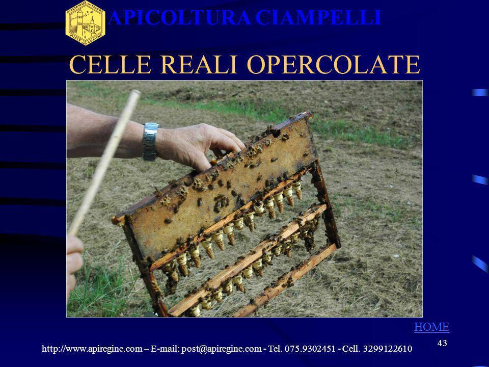 CELLE REALI OPERCOLATE