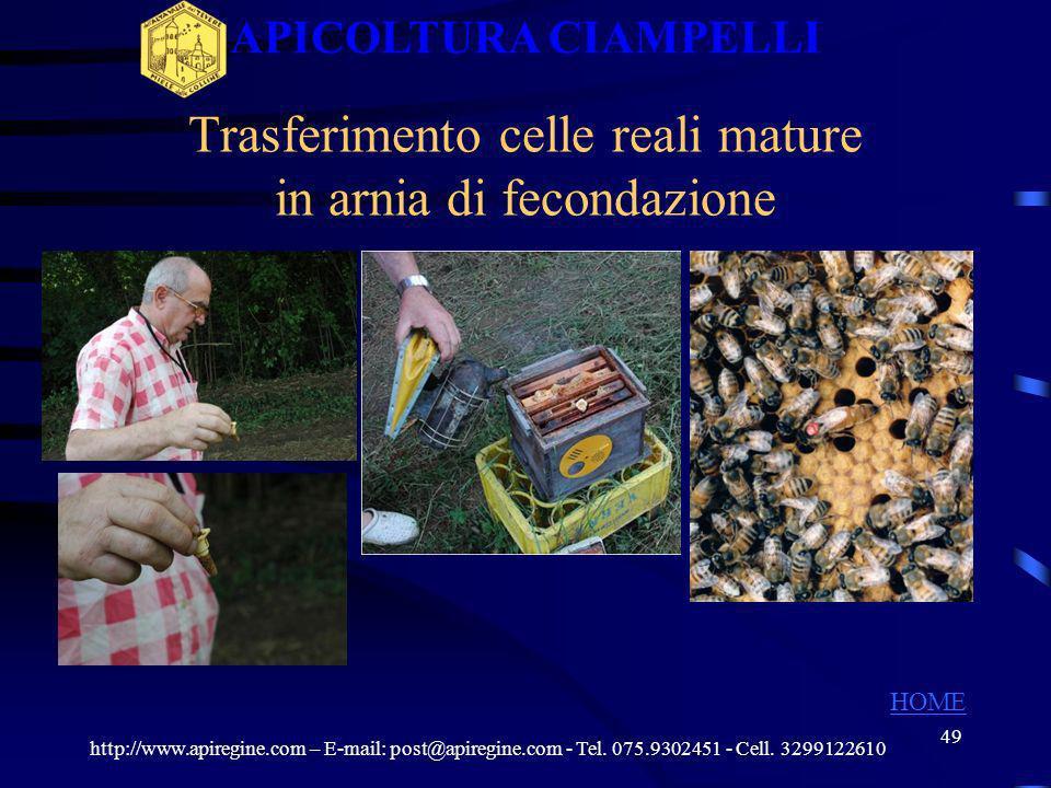 Trasferimento celle reali mature in arnia di fecondazione