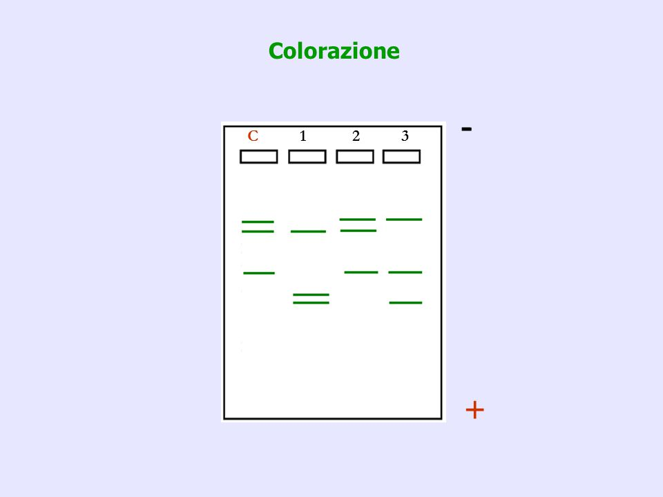 Colorazione - C 1 2 3 +