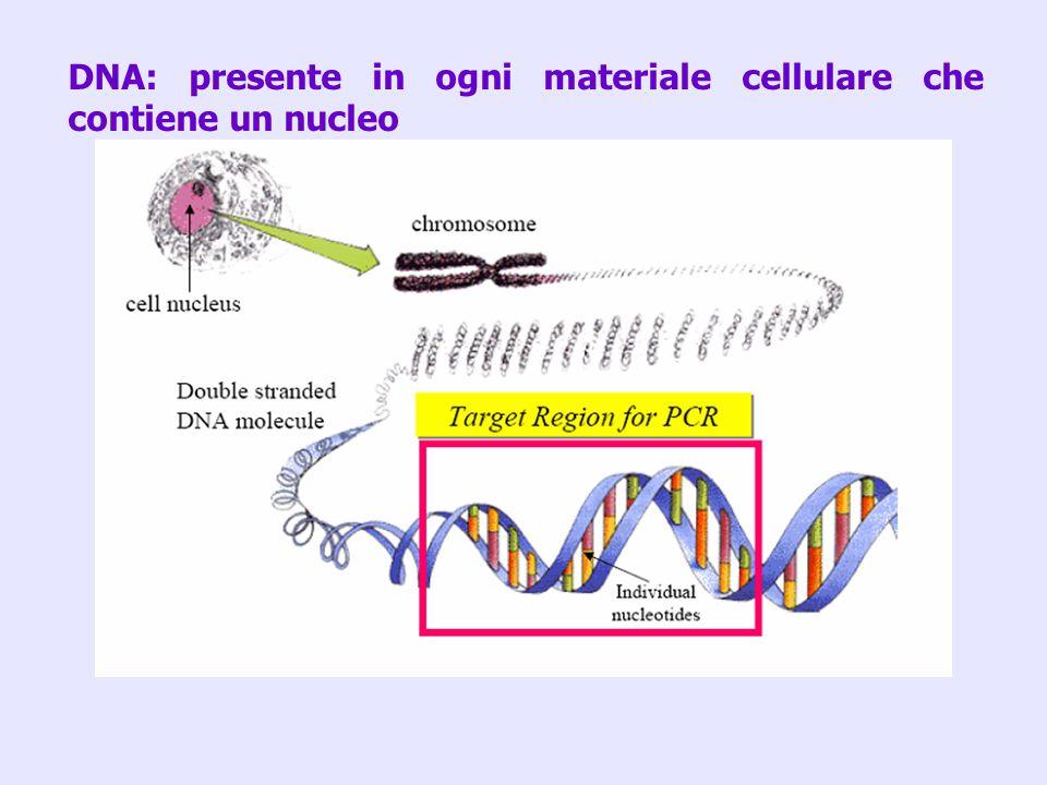 DNA: presente in ogni materiale cellulare che contiene un nucleo