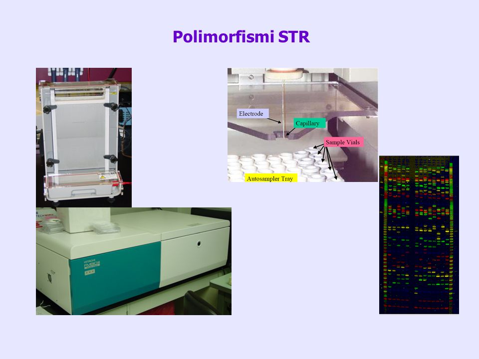 Polimorfismi STR