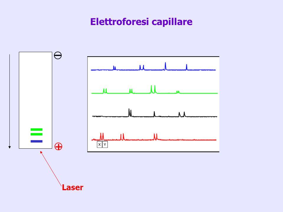 Elettroforesi capillare