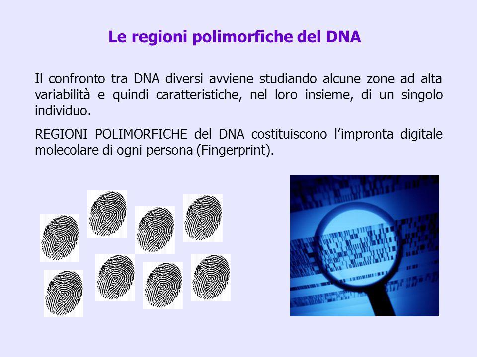 Le regioni polimorfiche del DNA