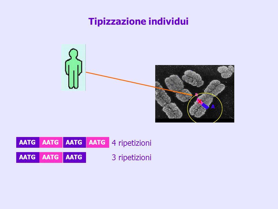 Tipizzazione individui