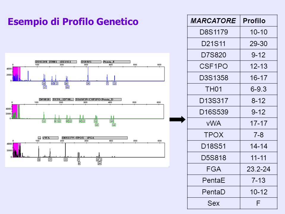 Esempio di Profilo Genetico