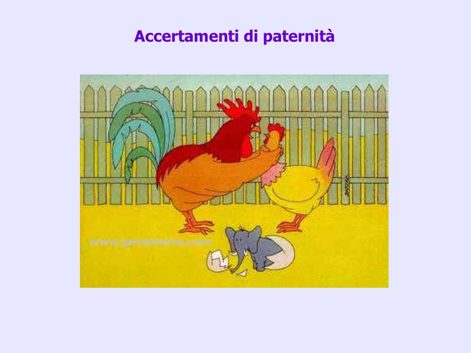 Accertamenti di paternità