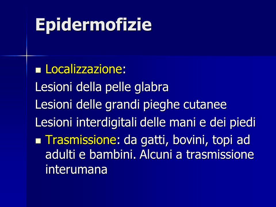 Epidermofizie Localizzazione: Lesioni della pelle glabra