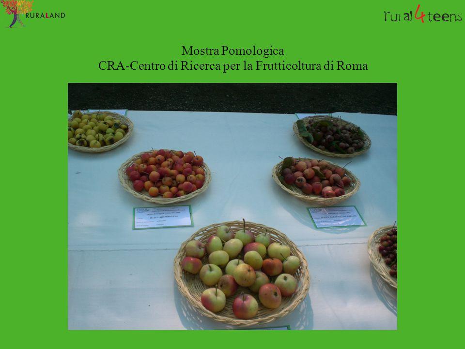 Mostra Pomologica CRA-Centro di Ricerca per la Frutticoltura di Roma