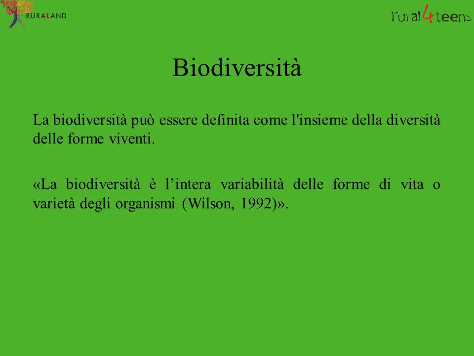 Biodiversità La biodiversità può essere definita come l insieme della diversità delle forme viventi.