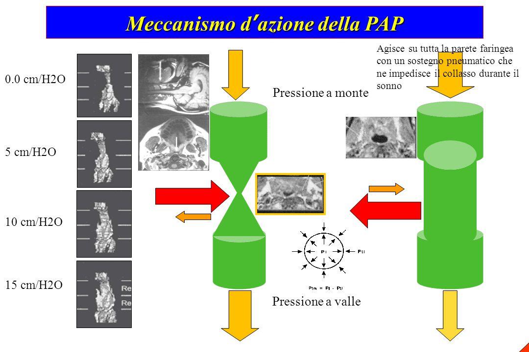 Meccanismo d'azione della PAP