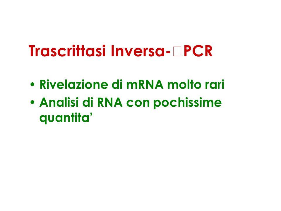 Trascrittasi Inversa-PCR