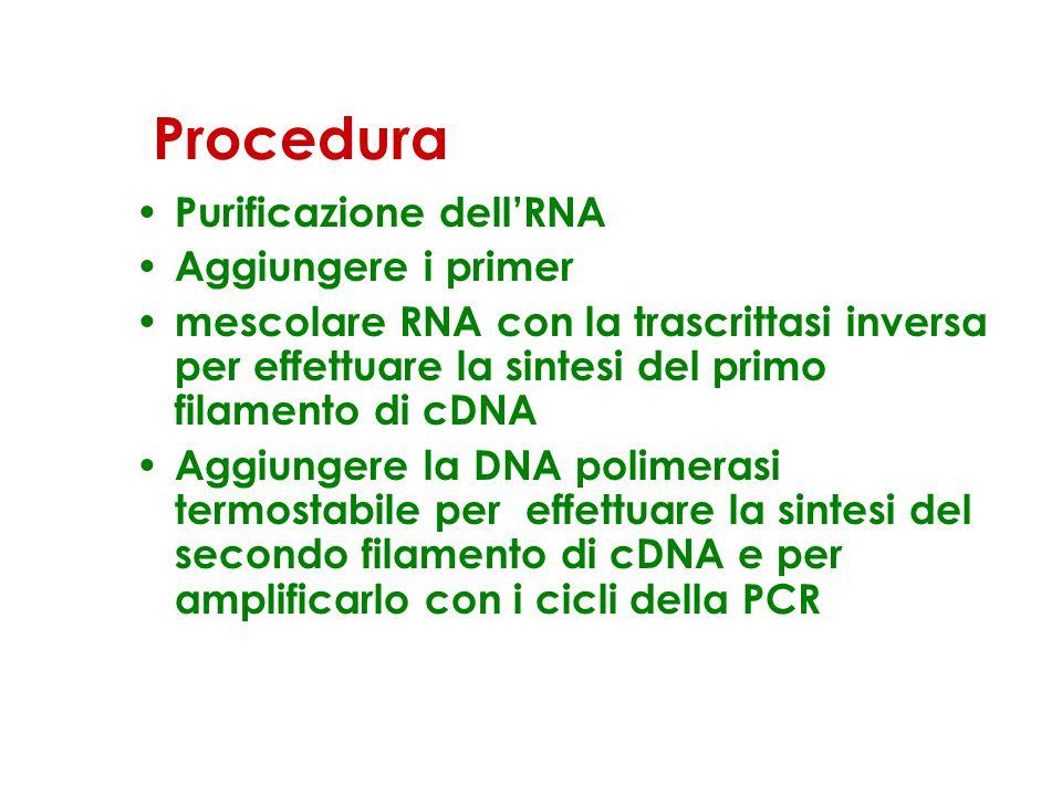 Procedura Purificazione dell'RNA Aggiungere i primer