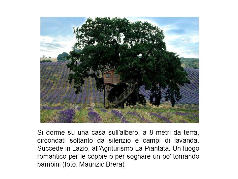 Si dorme su una casa sull′albero, a 8 metri da terra, circondati soltanto da silenzio e campi di lavanda.