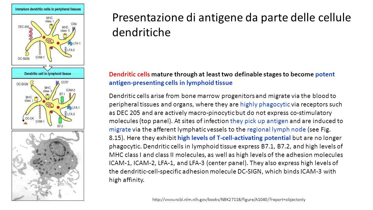 Presentazione di antigene da parte delle cellule dendritiche