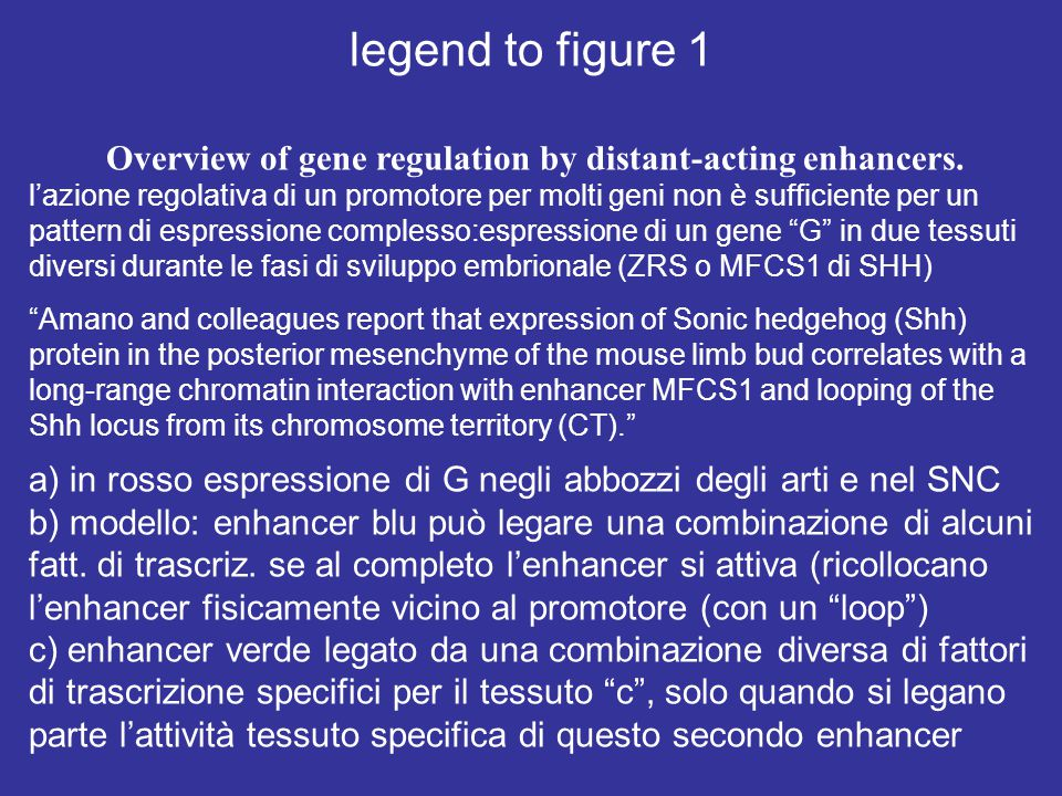 Overview of gene regulation by distant-acting enhancers.