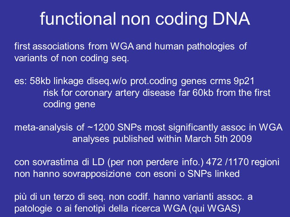 functional non coding DNA